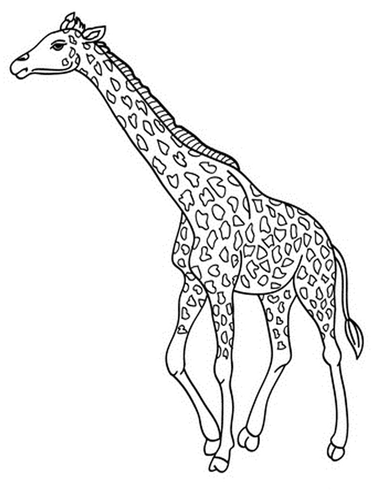 Giraffe Coloring Page Images