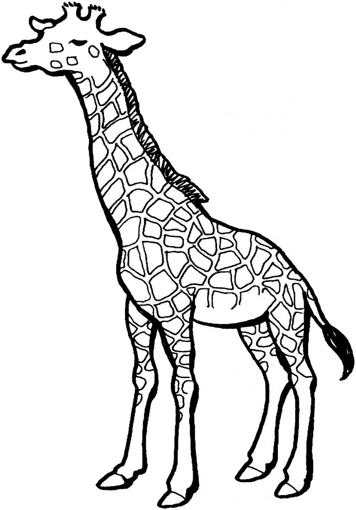 Giraffe Coloring Pages Images