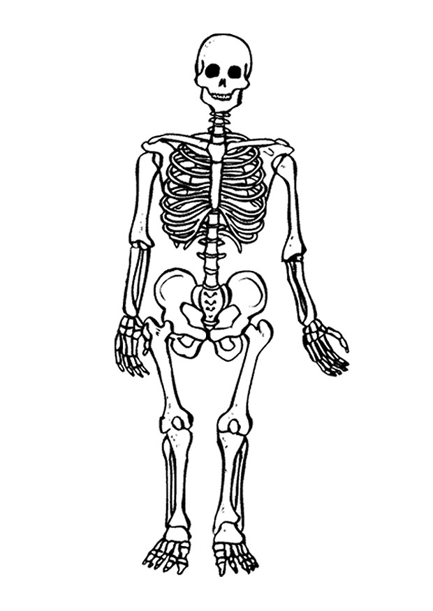 bone coloring pages - free printable skeleton coloring pages for kids