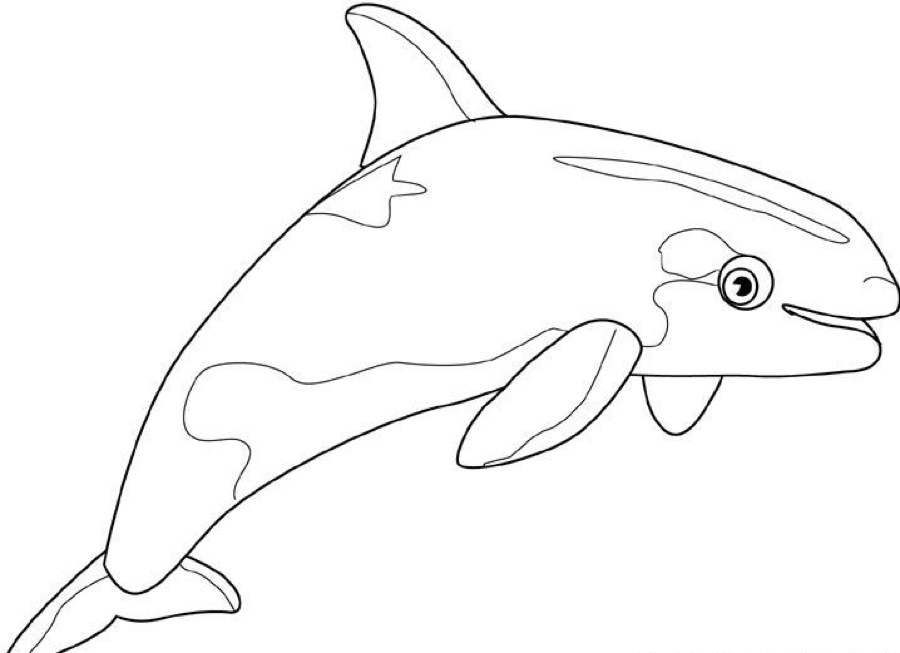 Killer Whale Coloring Pages For Kids