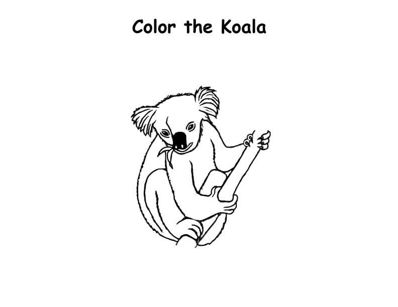 Koala Bear Coloring Pages Pictures