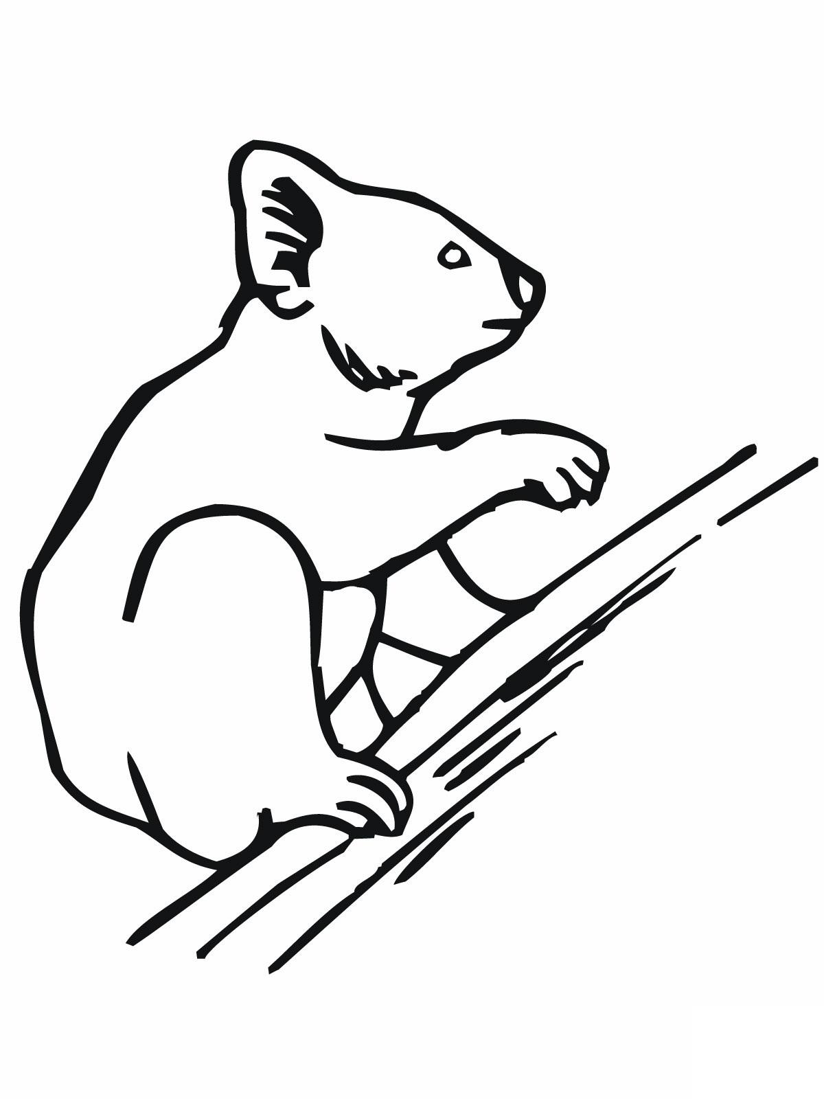 Free Printable Koala Coloring Pages
