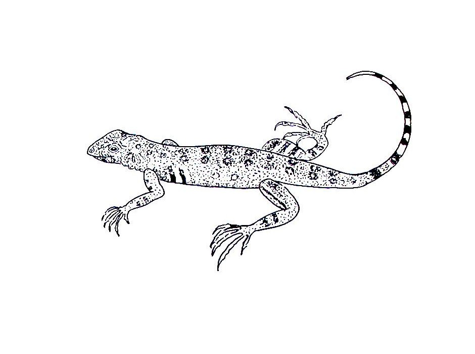 Best Lizards For Kids