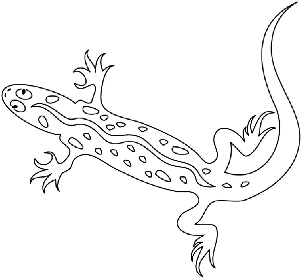 Free Printable Lizard Coloring