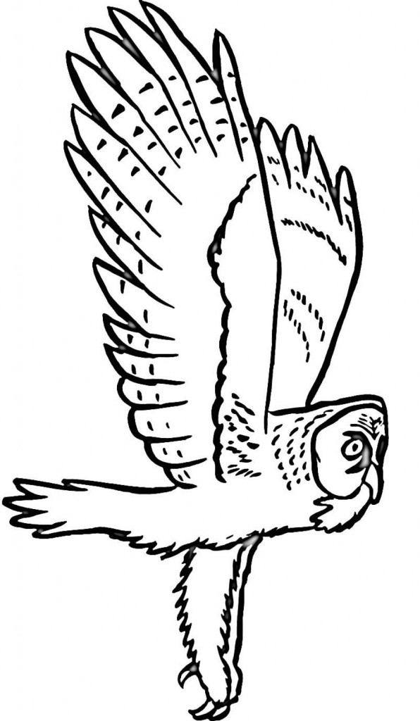 Owl Coloring Pages Images