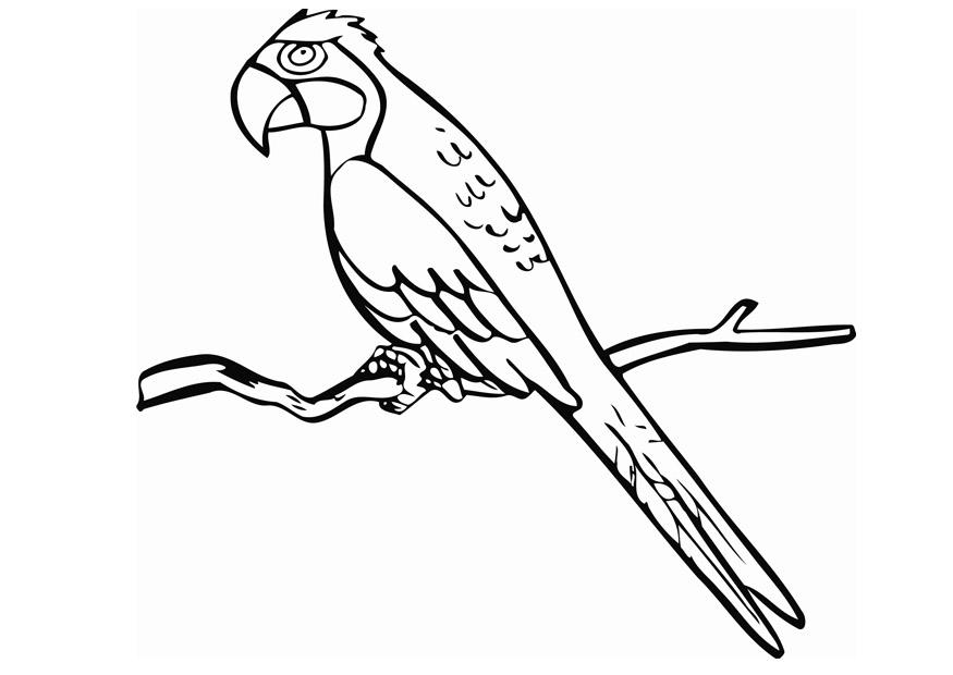 Parrot Coloring Pages Free