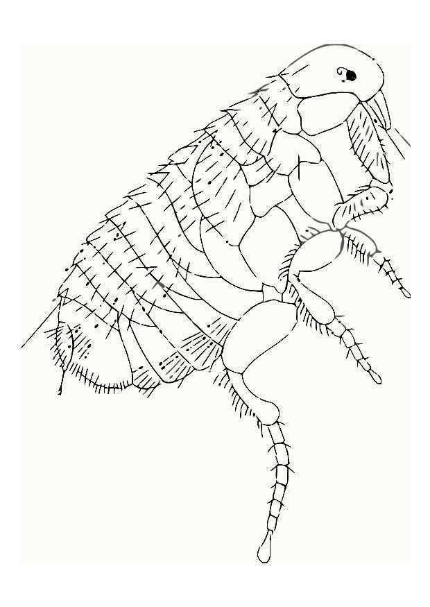 Pictures of Bug Coloring Pages