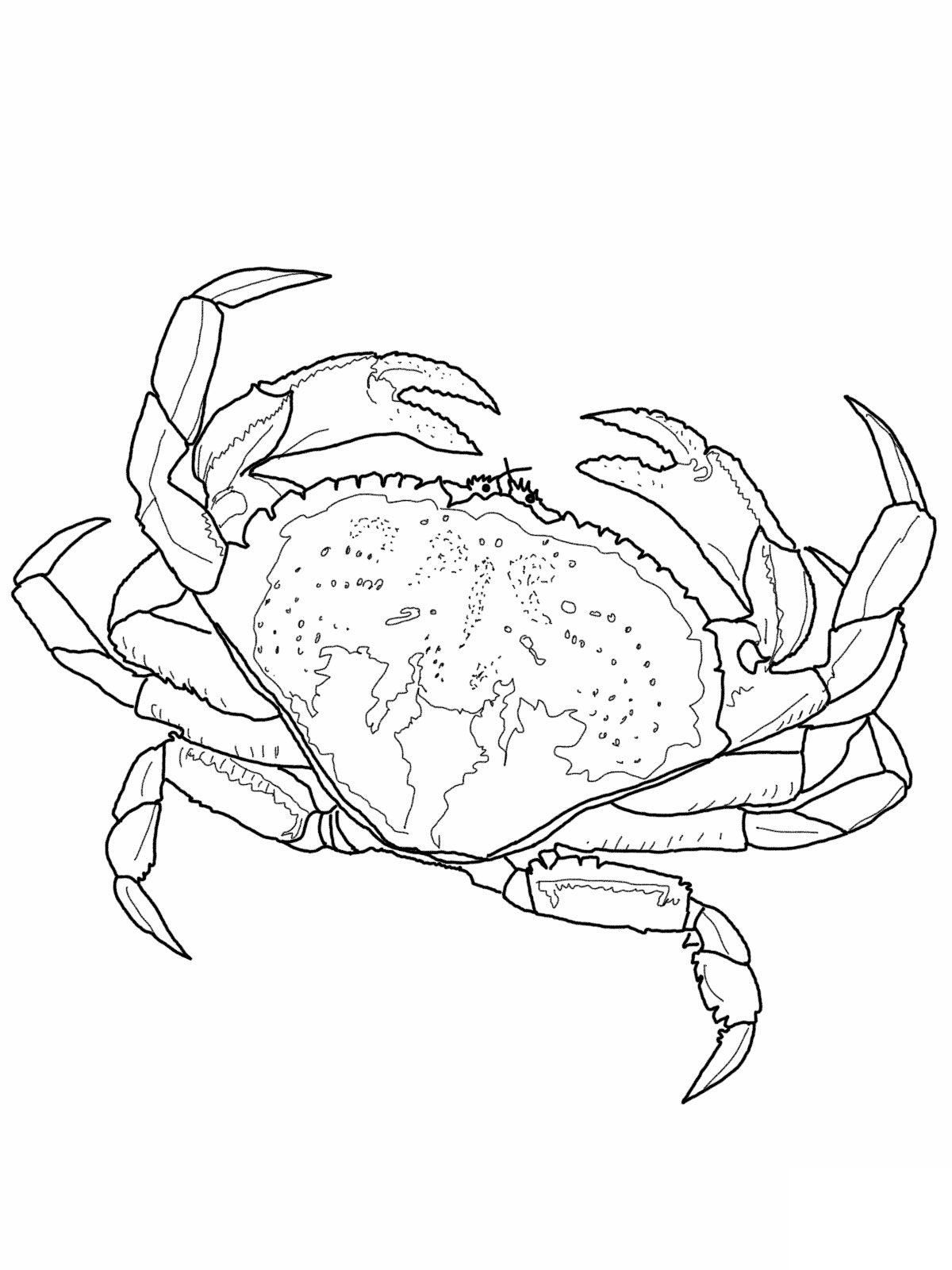 Pictures Of Crab Coloring Pages