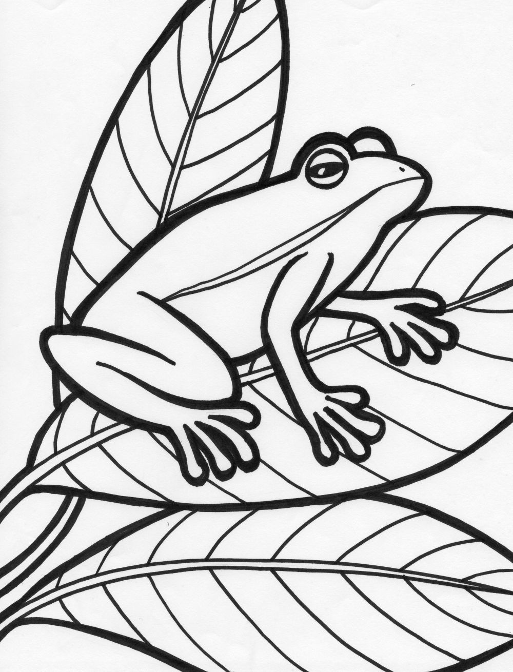 Free printable frog coloring pages for kids for Printable coloring book pages