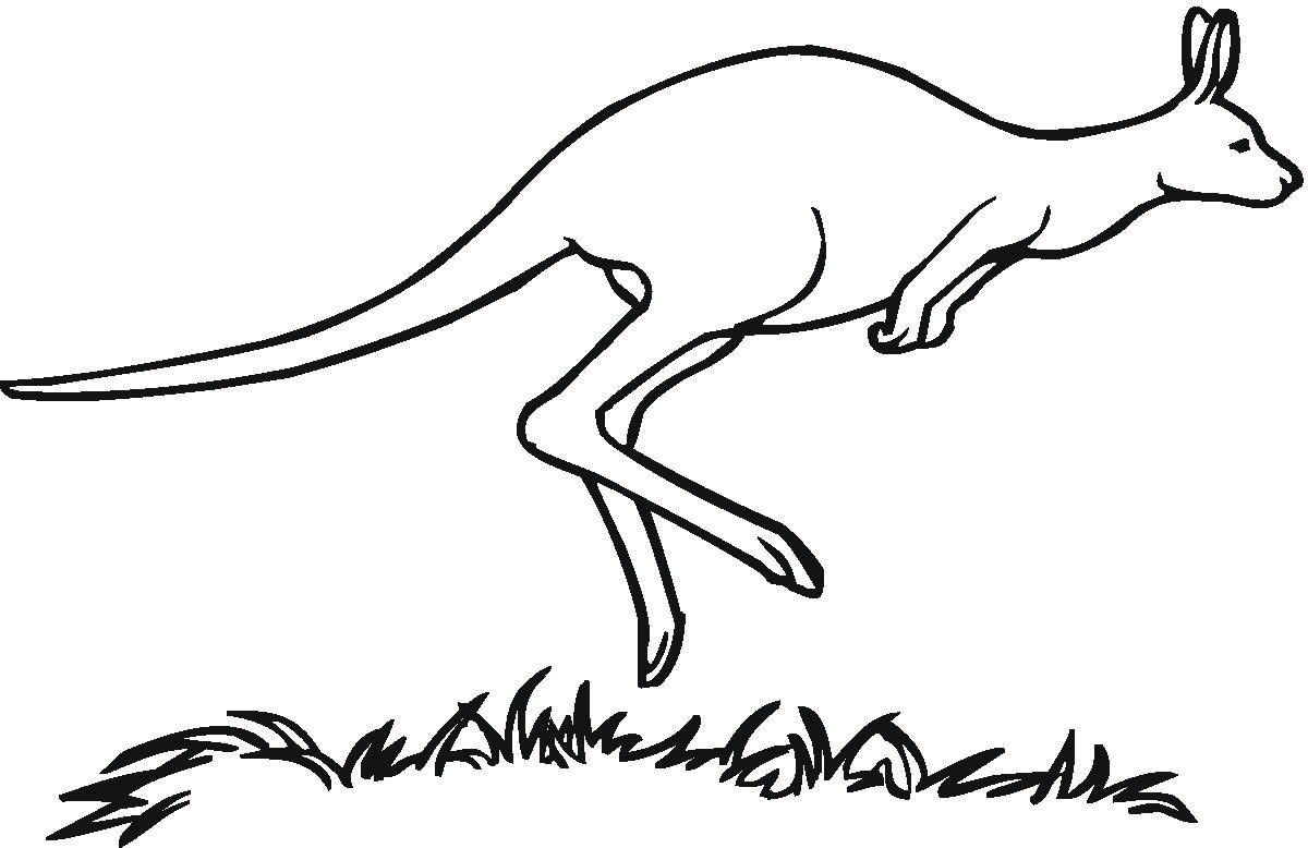Line Drawing Kangaroo : Free printable kangaroo coloring pages for kids