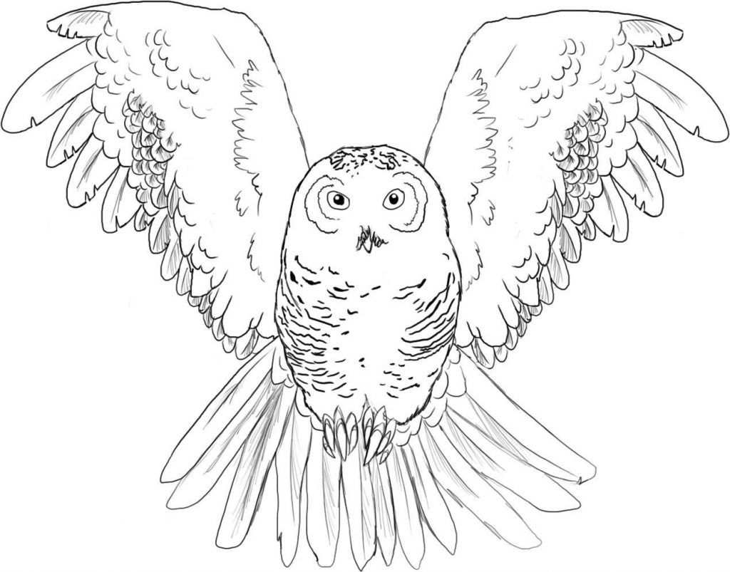 Printable Christmas Owl Coloring Pages