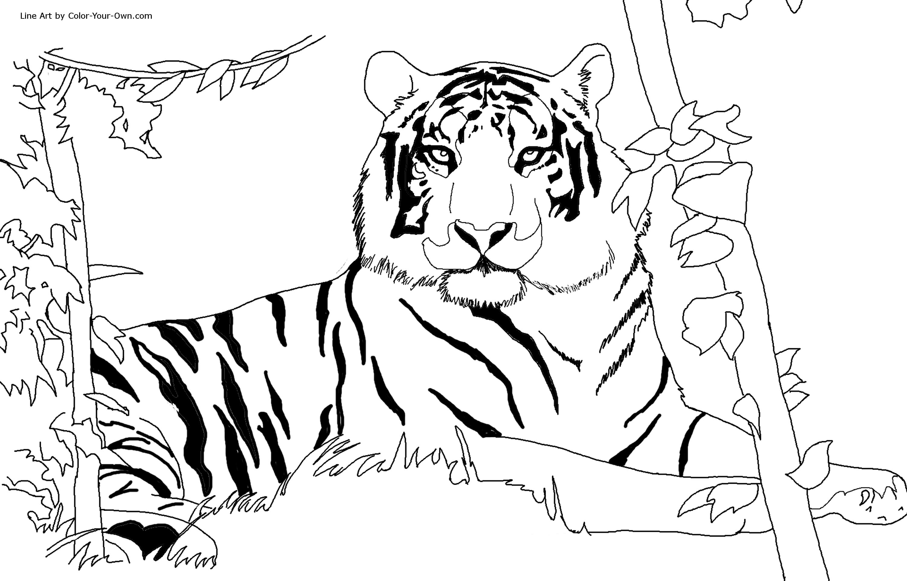 Printable Tiger Coloring Pages