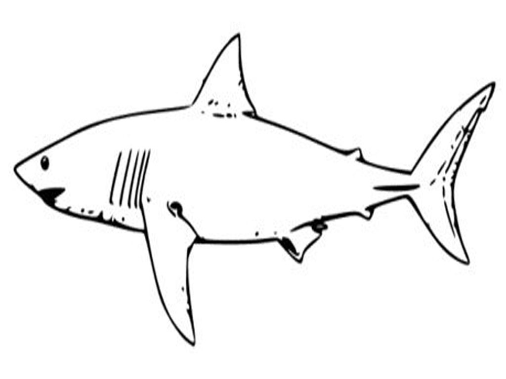 Free Coloring Pages Of Great White Sharks