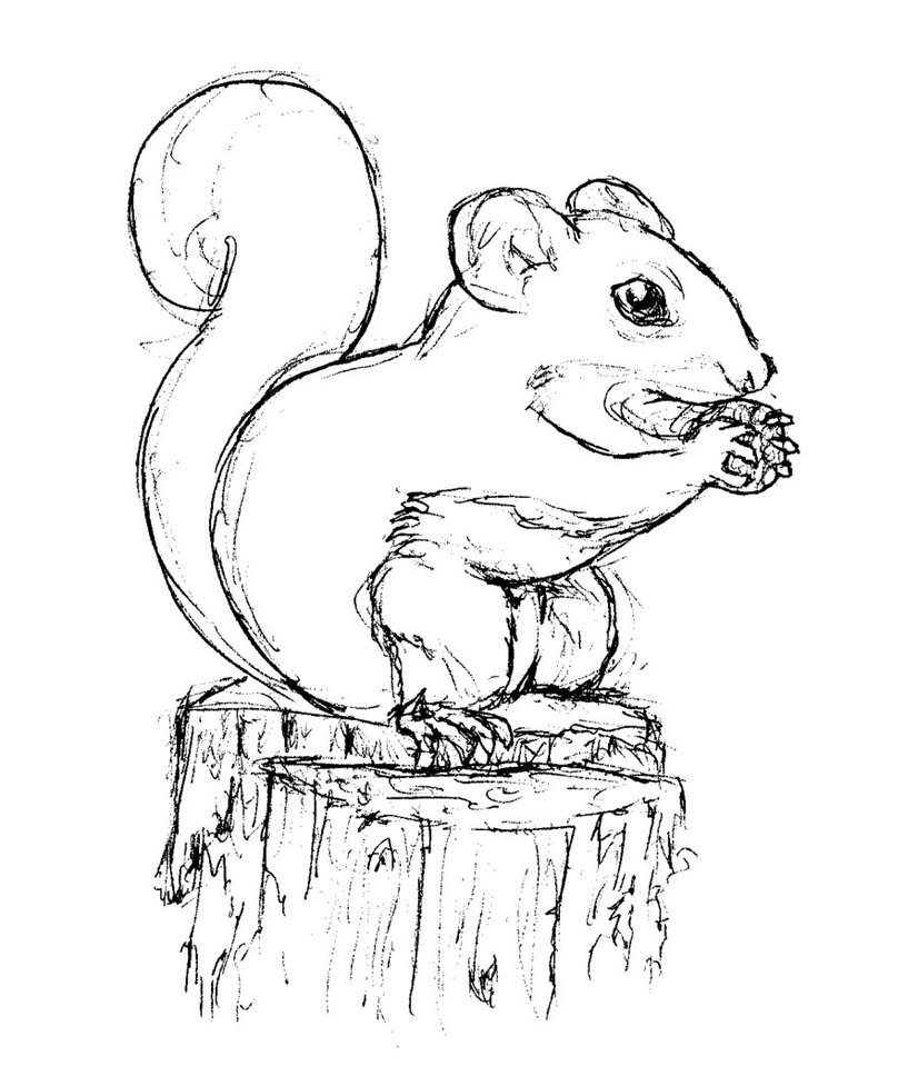 Squirrel Coloring Page Girl