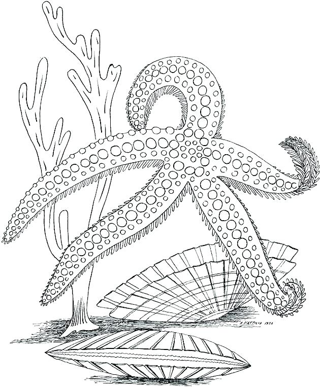 Starfish - Ocean Coloring Page