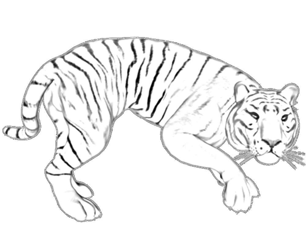 picture relating to Tiger Printable known as No cost Printable Tiger Coloring Web pages For Little ones