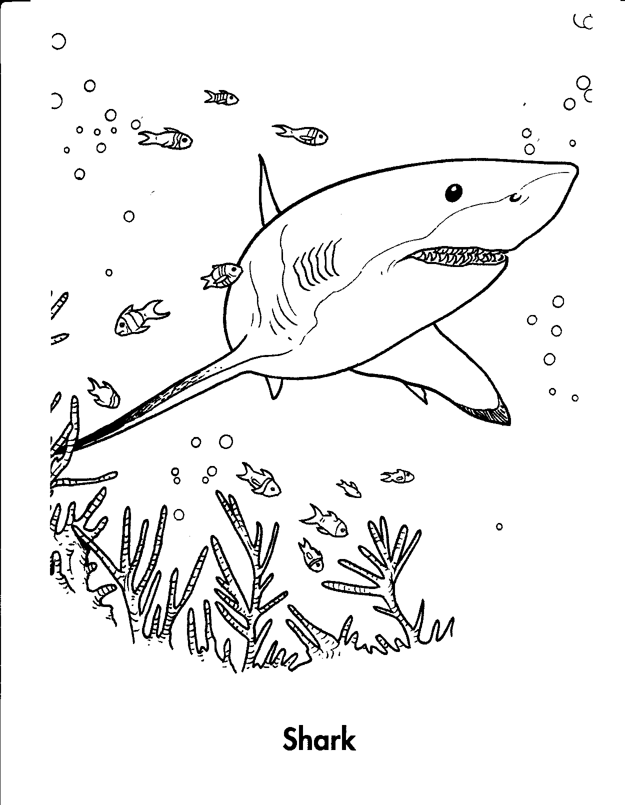 image relating to Shark Coloring Pages Printable called Free of charge Printable Shark Coloring Webpages For Small children