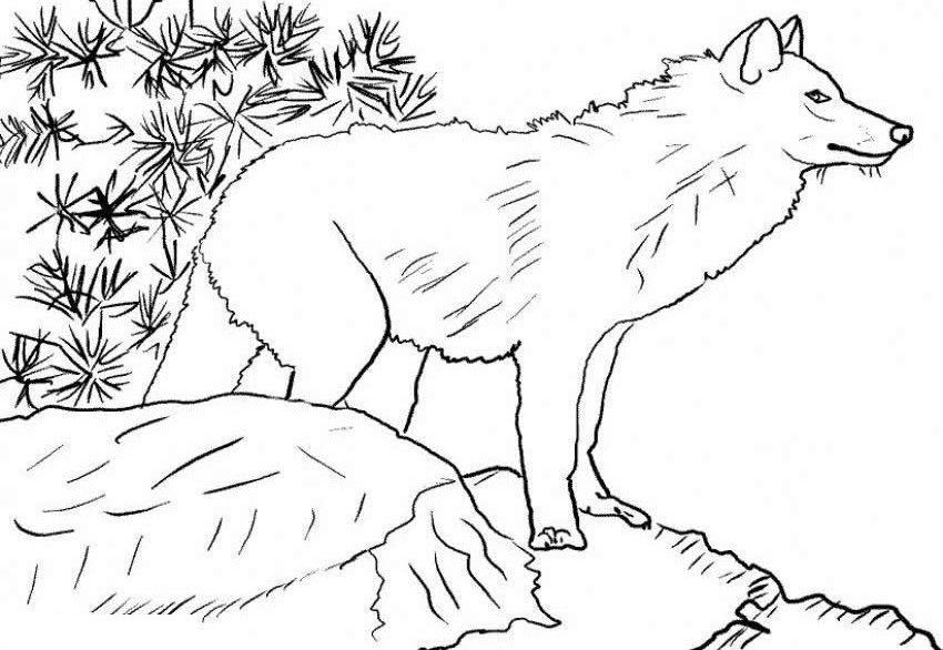 - Free Printable Wolf Coloring Pages For Kids