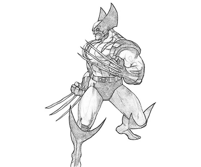 Wolverine Animal For Kids