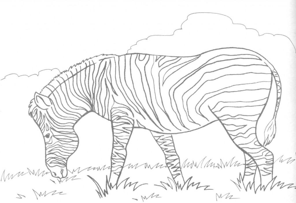 Zebra Coloring Page Images