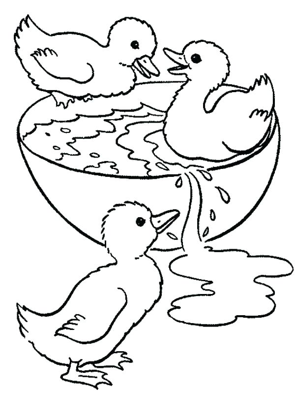 Duck Coloring Sheet