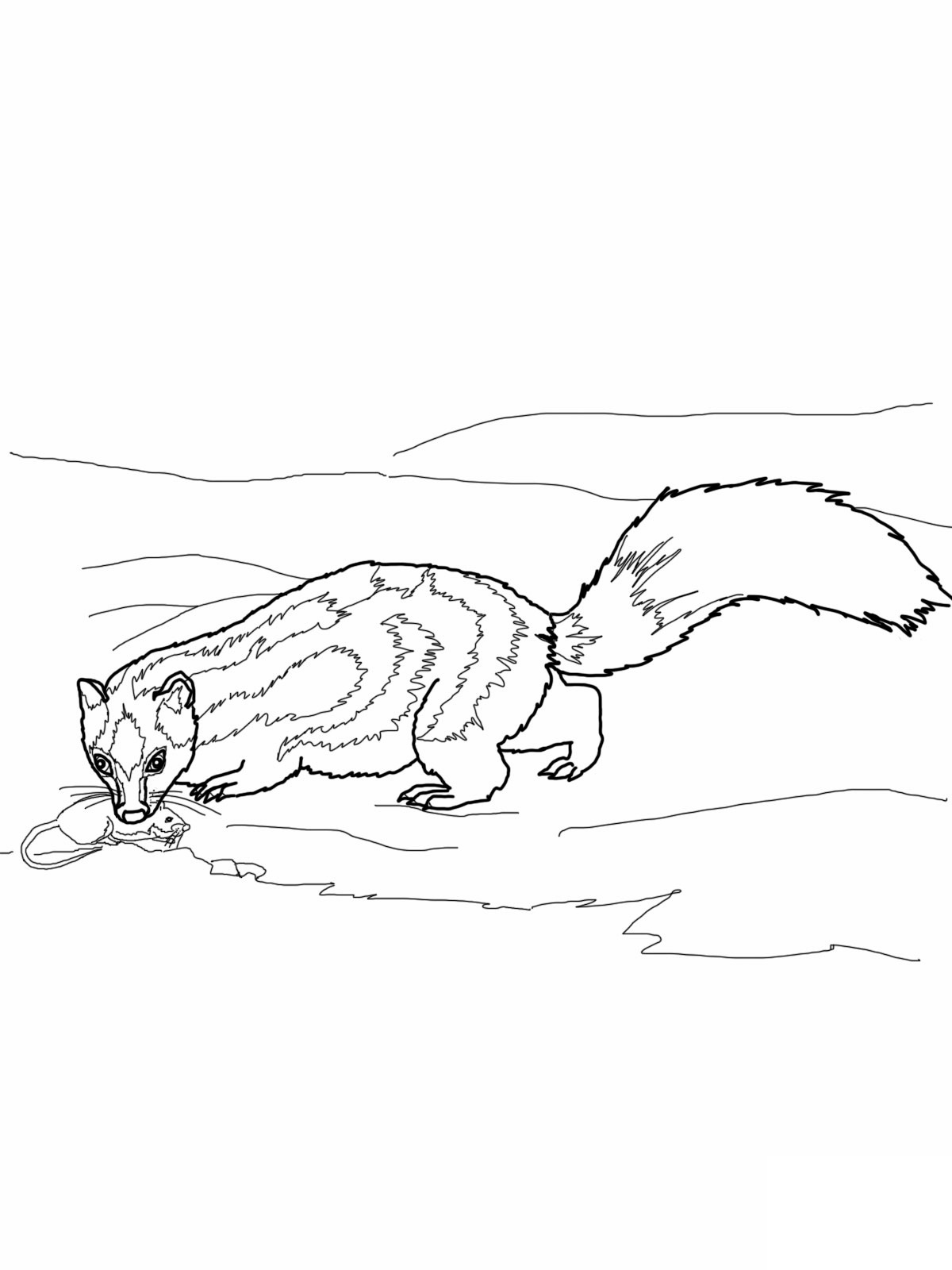 Printable Skunk Coloring Pages For Kids | 1600x1200