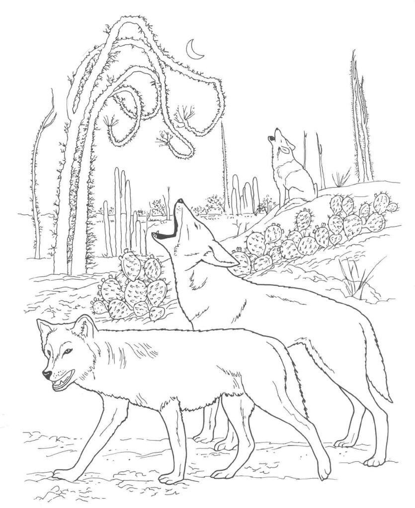 Coyote Animal Coloring Pages