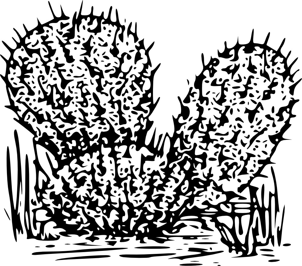 Free Printable Cactus Coloring Pages