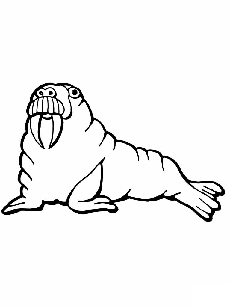 Free Printable Walrus Coloring Pages