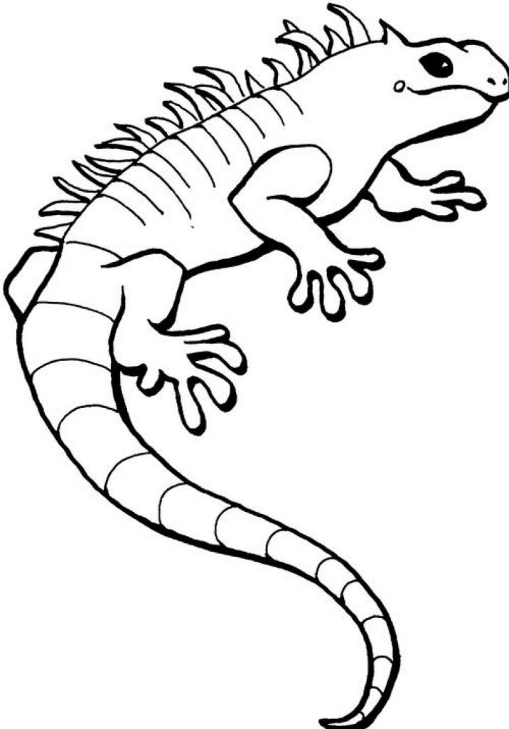 Free printable iguana coloring pages for kids - Coloriage iguane ...