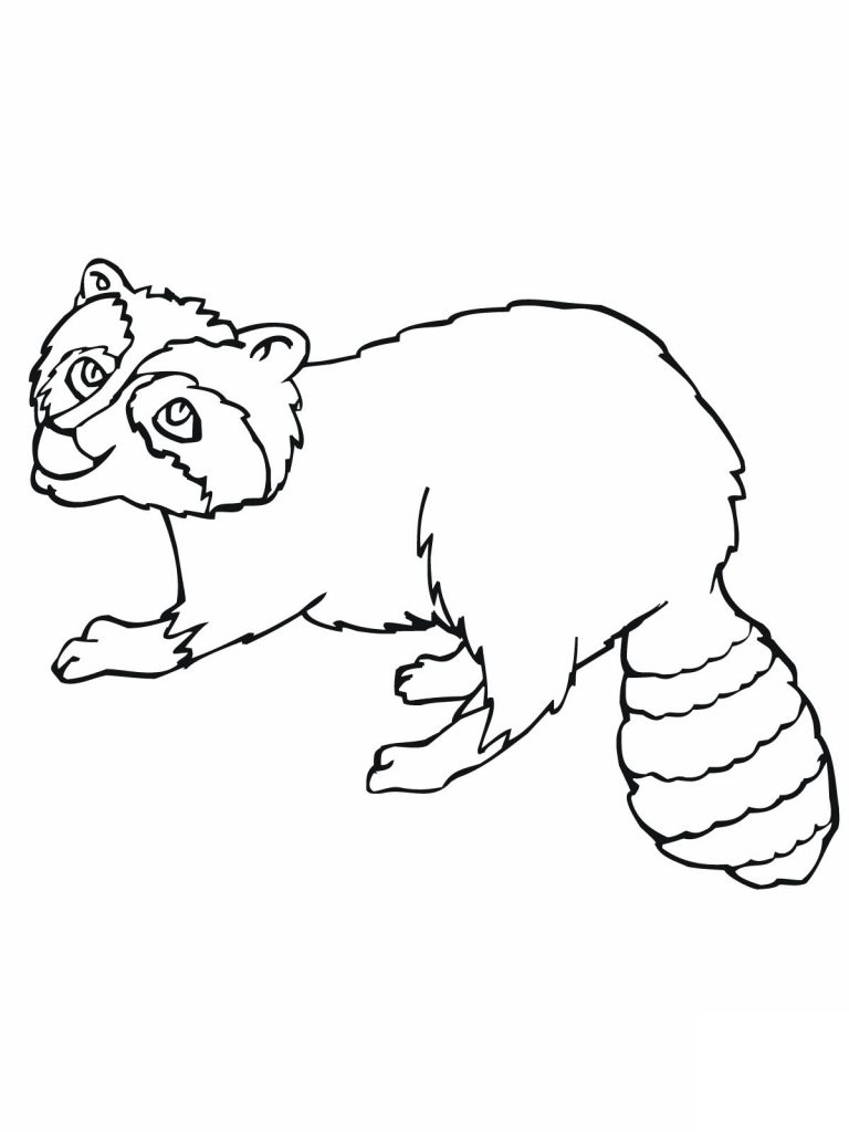 Raccoon Coloring Pages Pictures