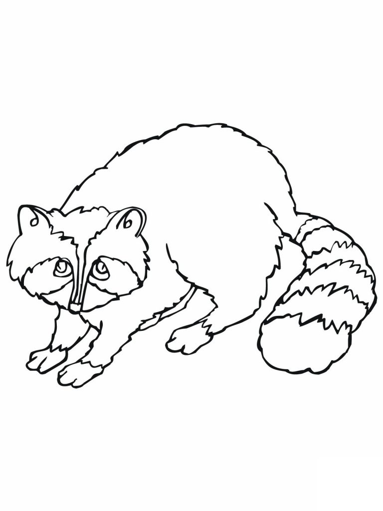 Raccoon Coloring Pages To Print