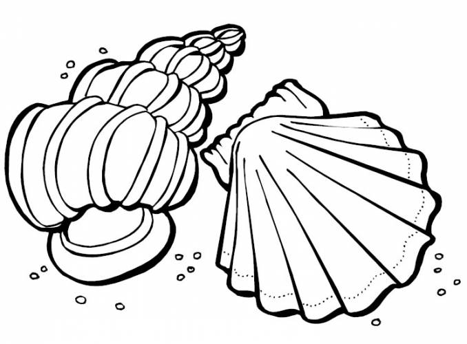 This is a graphic of Seashell Printable regarding coloring page