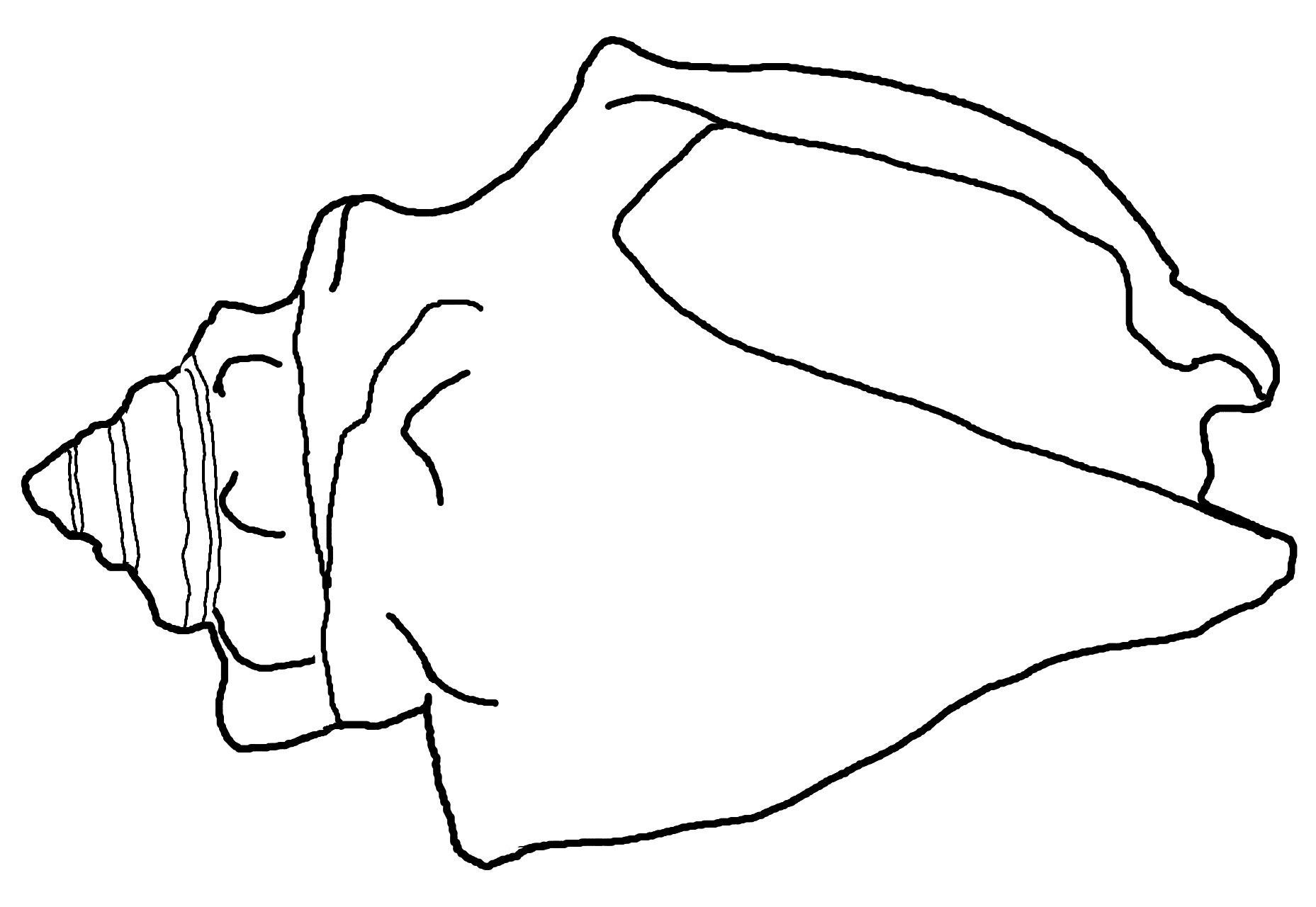 coloring pages of sea shell - photo#11