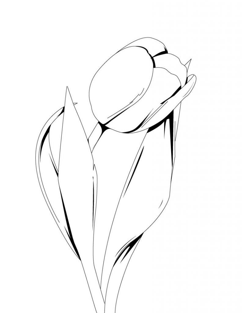 Tulip Coloring Pages For Kids