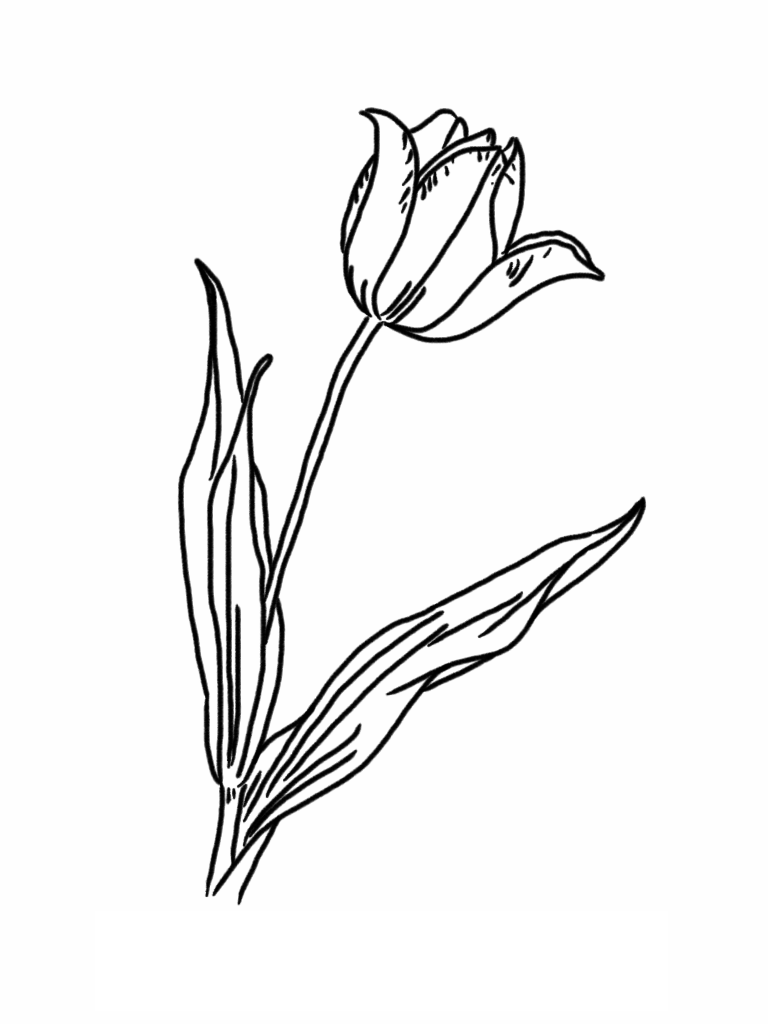Tulip Coloring Pages Images