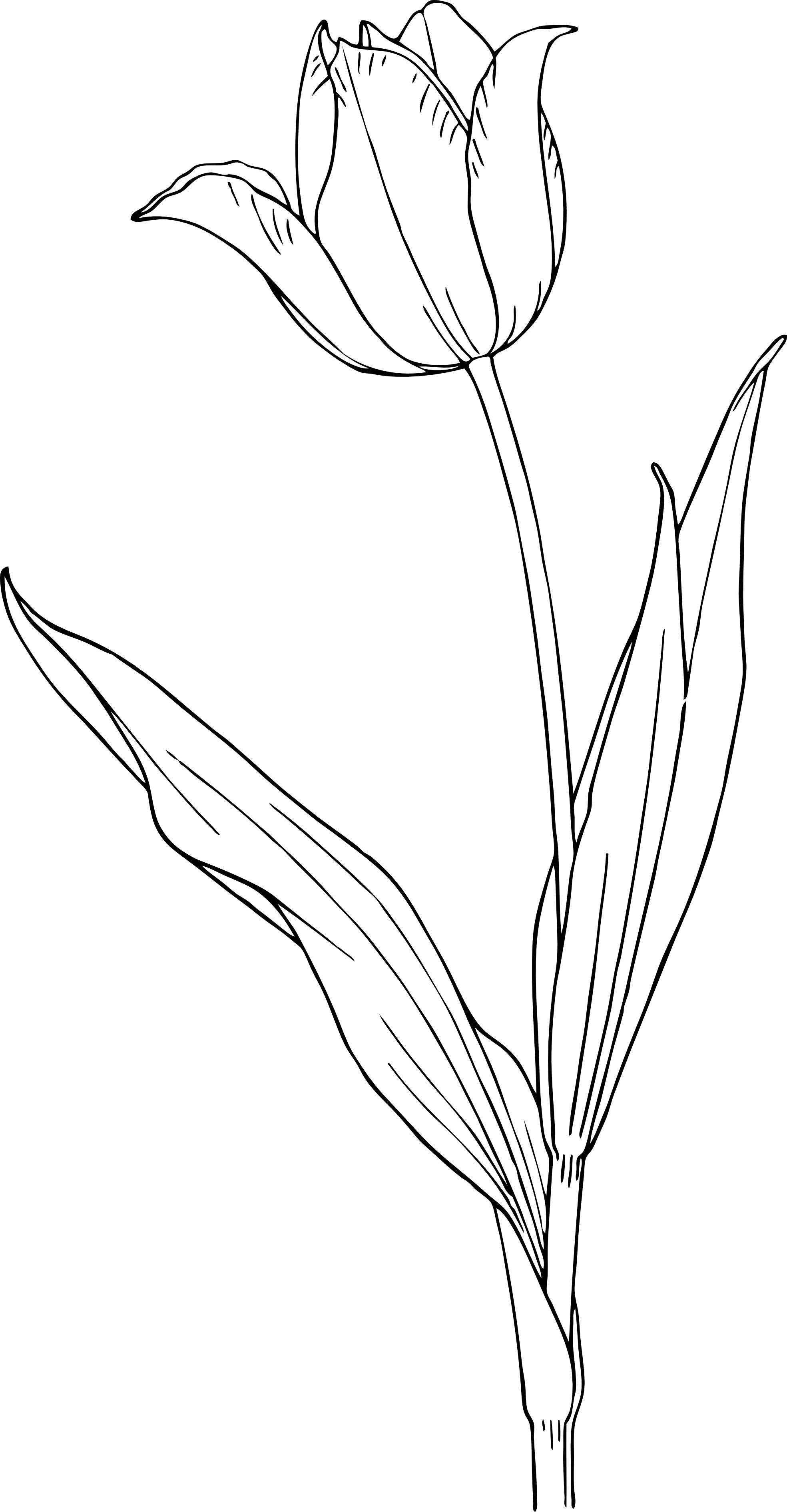 Image Result For Summer Flowers Coloring Pages