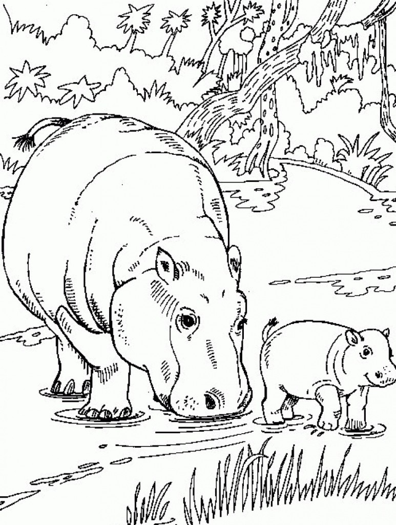 Hippo Coloring Pages Images
