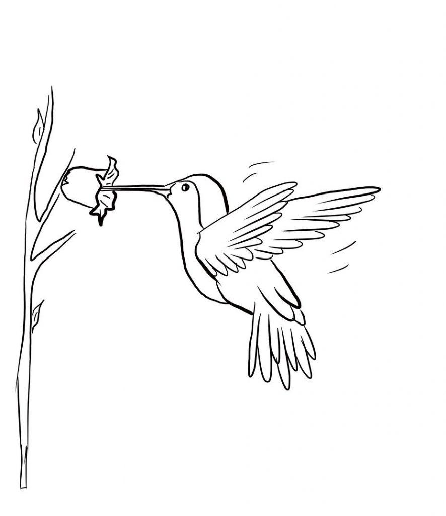 Hummingbird Coloring Page