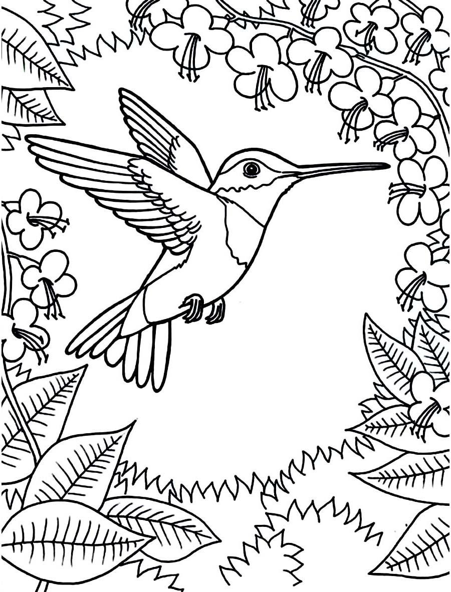 Hummingbird Scene Coloring Page