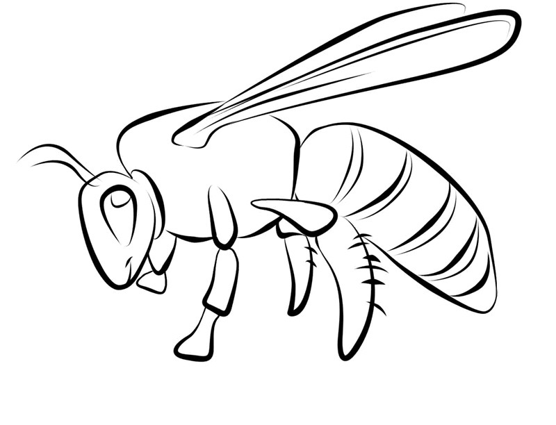 free bee coloring pages - photo#26