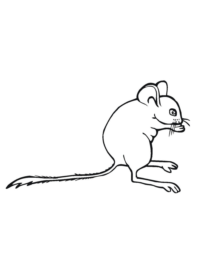 Coloring Pages of Mouse