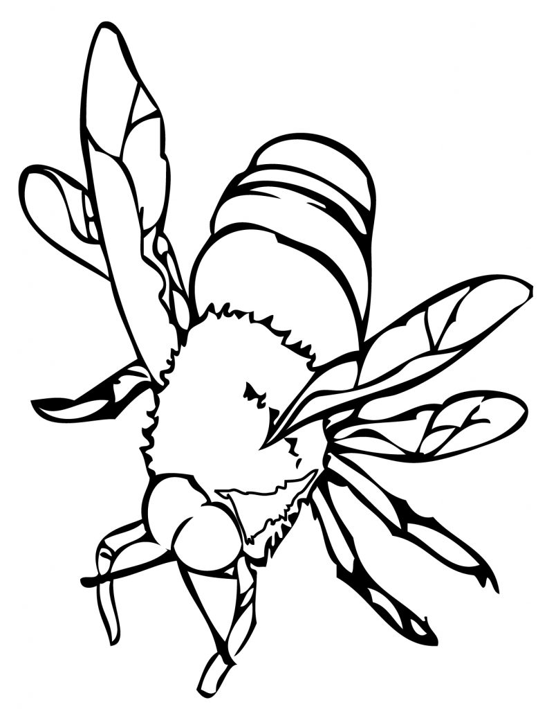 free bee coloring pages - photo#15