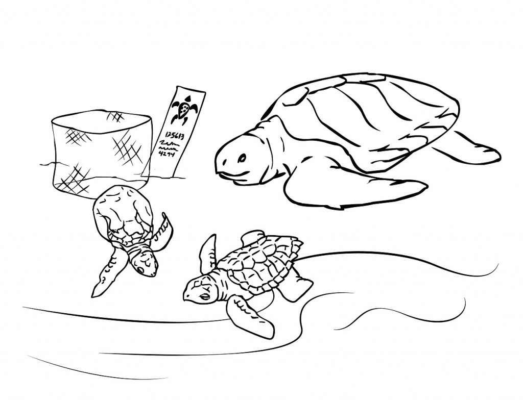 Printable Sea Turtle Coloring Pages