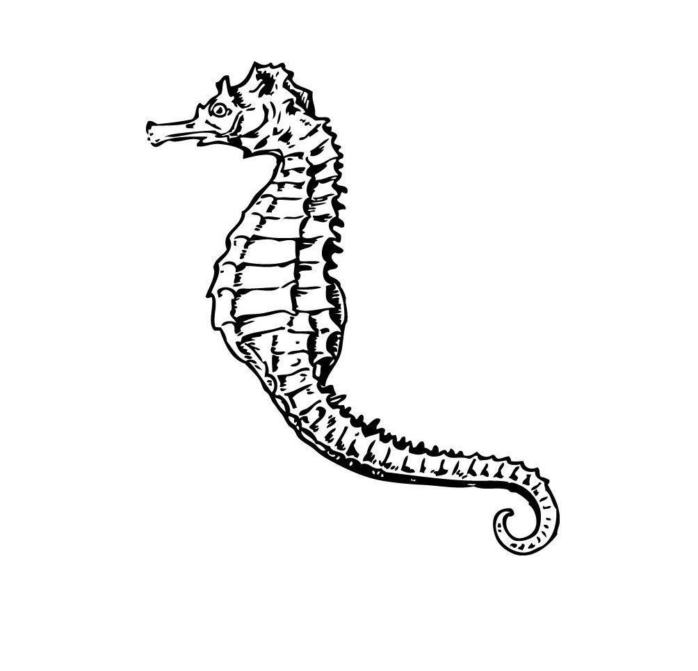 Printable Seahorse Coloring Pages
