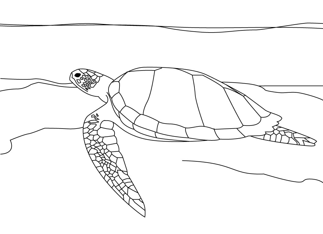 Sea Turtle coloring page | Free Printable Coloring Pages | 770x1060