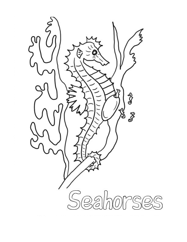 Seahorse Coloring Pages For Kids