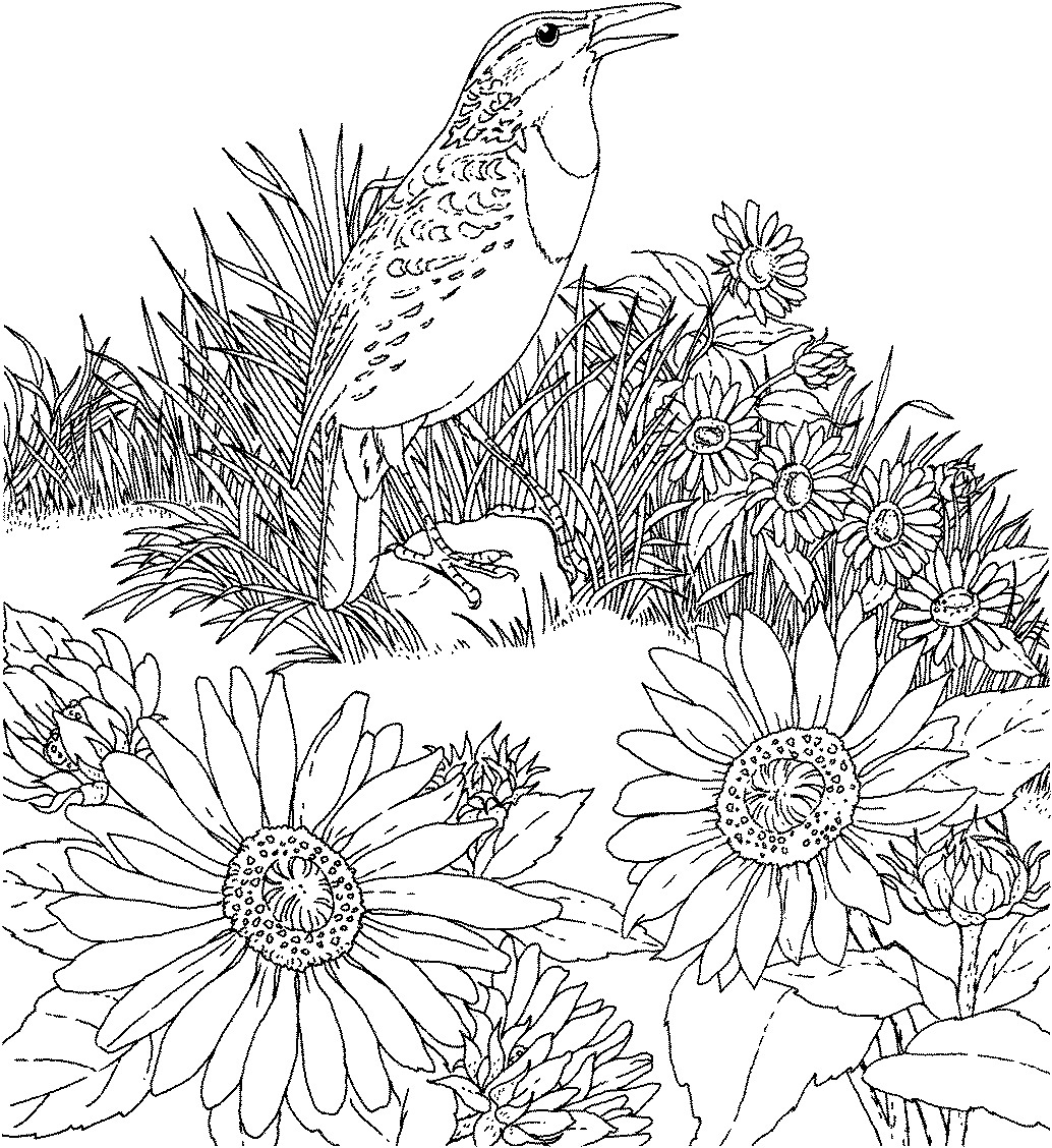 Free printable sunflower coloring pages for kids for Printable coloring book pages