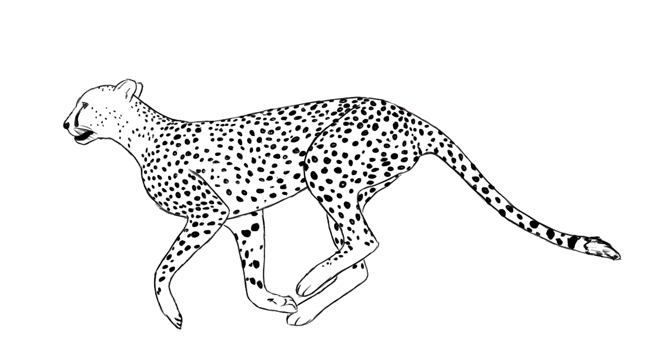 Cheetah Coloring Pages Print
