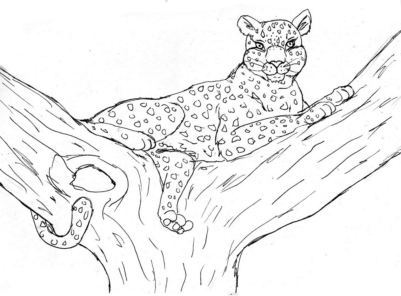 coloring pages cheetah - photo#35